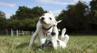 Puppies playing © Becky Murray/RSPCA Photolibrary
