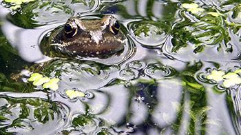 Toad under the water - YPA 2005 Under 12 runner up Alex Worthington