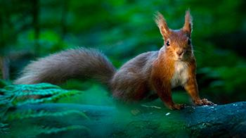 Squirrel in the woods - YPA 2011 Winner 16-18 Will Nicholls